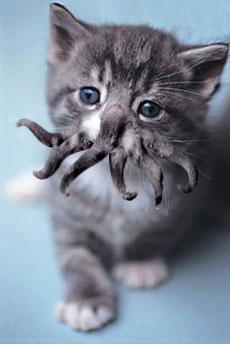 <@¿@> du 6septembre : OBJET MYSTERE - Page 7 Cthulhu_kitty